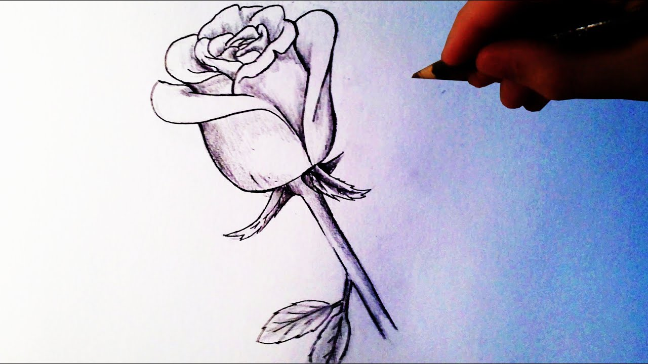 how to draw a rose easy tutorial youtube