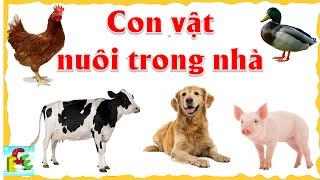 Dạy bé học các con vật nuôi trong nhà | tiếng kêu và hình ảnh động vật sống trong gia đình | ECE 1