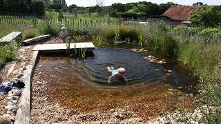 how to build a DIY organic pool:natural pool in 3 minutes