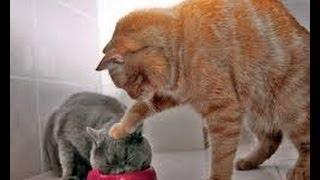 Lustige Katzen Videos Zum Totlachen , Katzen Lustig , Lustige Tiere , Lustige Videos , Katzen Lustig