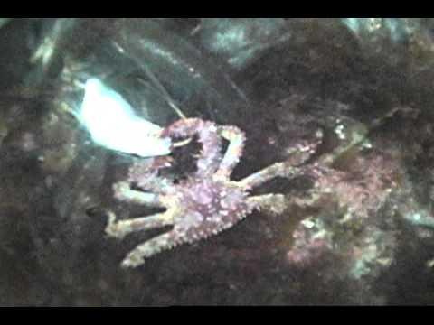 ловля крабов на глубине