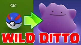WILD DITTO | THE HARDEST POKEMON TO FIND | Pokemon GO