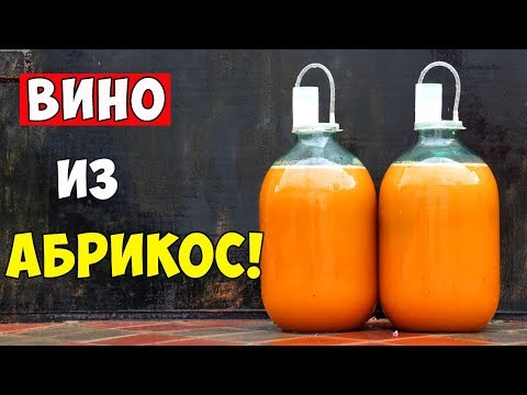 ВИНО ИЗ АБРИКОСОВ / Абрикосовое Вино / ПРОСТОЙ РЕЦЕПТ / Apricot Wine
