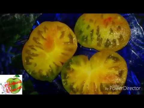 Посев томатов в холодный парник