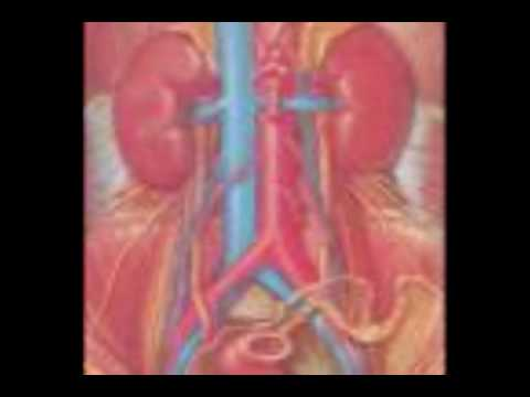 Documental sobre Deficiencia Renal