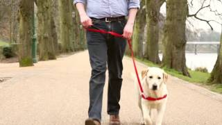 easy walk harness köpek tasması