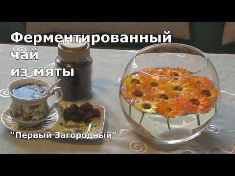 Чай из мяты в домашних условиях