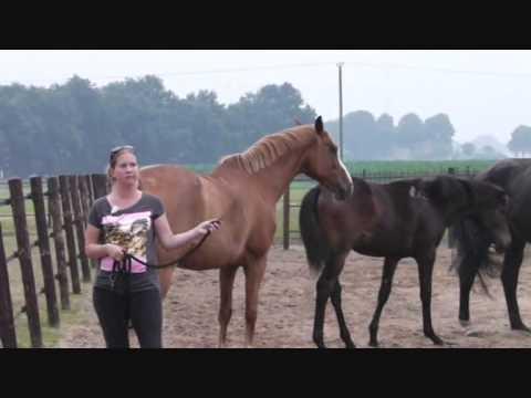 voor je paard
