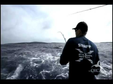Shimano orca topwater lures youtube for American legacy fishing