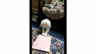 Funny Cats Playing with Paper Bags.Snowy