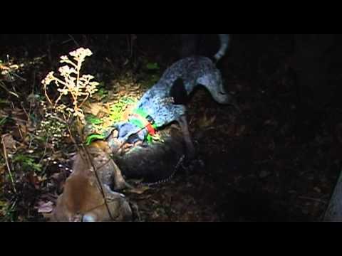 CTO Coon Hunting Hoosiers