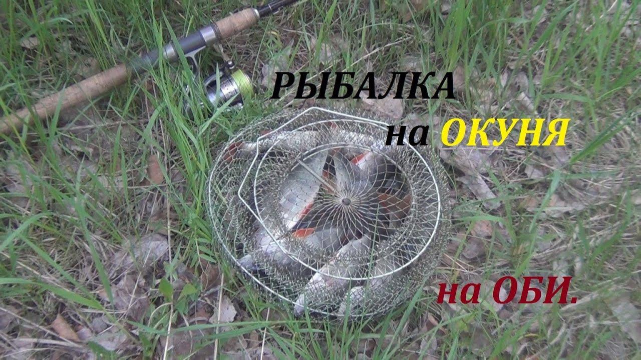 Рыбалка на окуня на Оби на спиннинг. 23 ...: youtube.com/watch?v=u-0sksmyksc