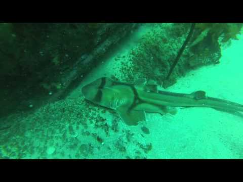 Diving Botany Bay