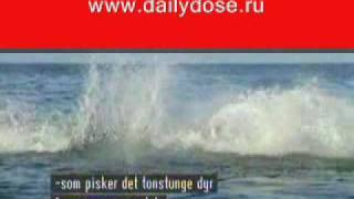 Атака акулы Shark attack! Amazing video!