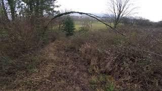 chasse renard 15/012018