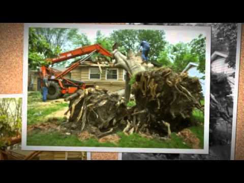 Top Notch Tree Service, Max Meadows, VA - (276) 699-1415