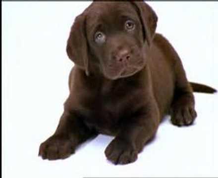 Boris – KNGF Adopteer een pup