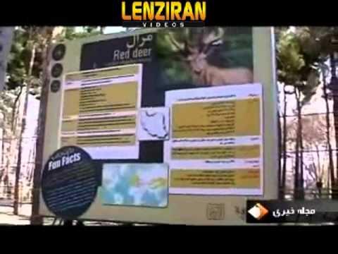 Lady lion of tehran zoo gave birth to three female baby lions