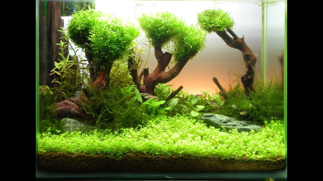 Выращивание мхов аквариумных 91