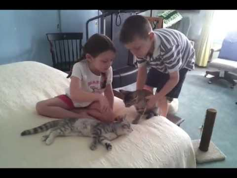 New room, dentist, hair cut, playing with kittens- Logie & Claire Bears Hawesome Adventures (Vlog4)
