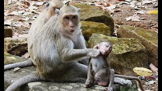 Mom monkey hate and choke baby,Jessie very scare run to grand ma/Wild Monkey