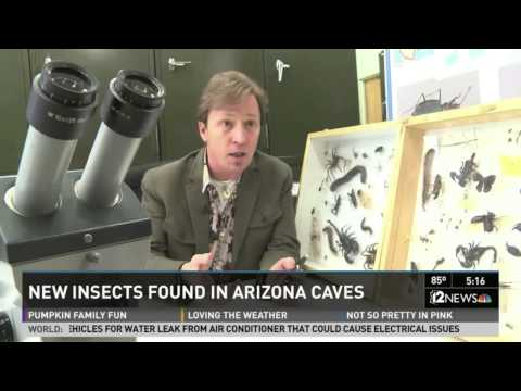 Nine new cave bug species from Arizona and New Mexico, Channel 12, Phoenix
