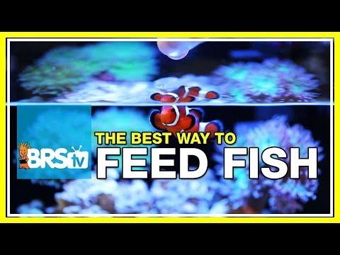 Week 41: Feeding fish - Selecting food for maximum health & longevity | 52 Weeks of Reefing #BRS160