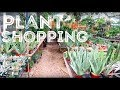 Plant Shopping at The Flower Bin | LONGMONT, CO
