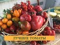 Дачные сезоны  18.08.18. Выбираем самые вкусные томаты