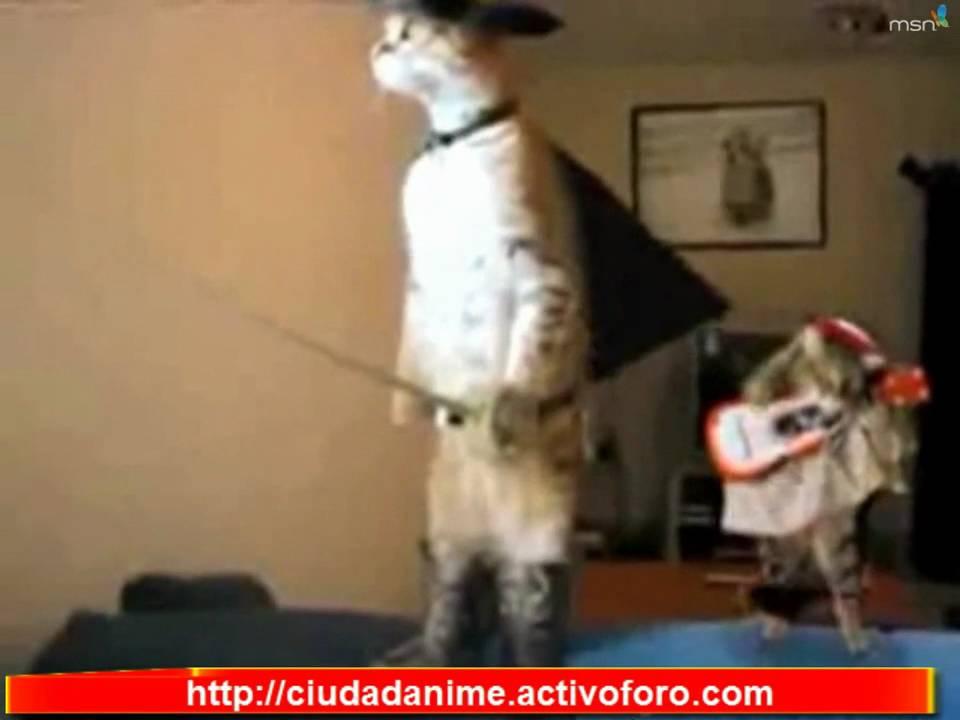 el verdadero gato con botas   youtube