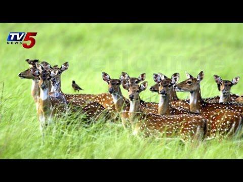 Deer Hunters in Nalgonda | Spotted deer found dead : TV5 News