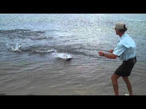 Fly-fishing for ladyfish, Pensacola, Florida