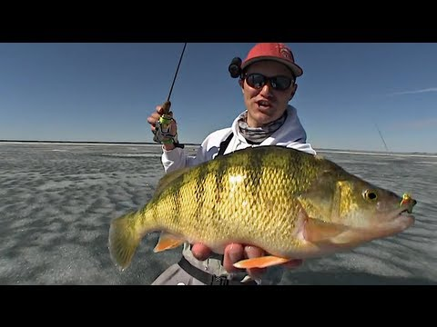 iPerch - Basic Trophy Perch Attack - Uncut Angling - January 6, 2013