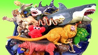 Learn Sea Animal Names and Zoo Animals Names Educational Video For Children
