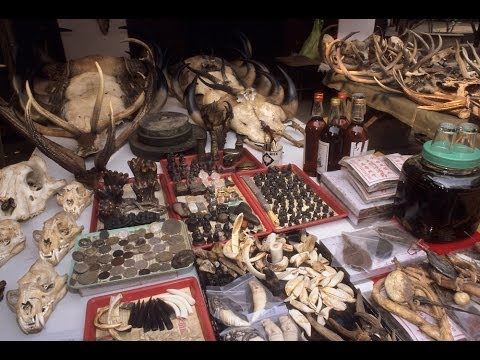 ILLEGAL BILLION DOLLAR WILDLIFE TRADE in ASIA - What can be done to STOP IT?