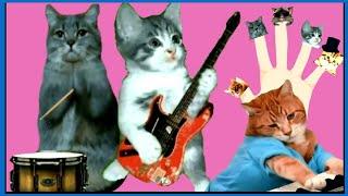 Cat Finger Family , Finger Family Song  for kids & Babies with Lyrics.