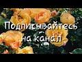 Са Чу Ерзар Акха Делии Везар Сагаипова Иман 2018 mp3