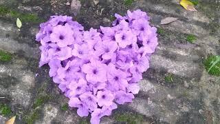 Ghép hình trái tim tặng người yêu.