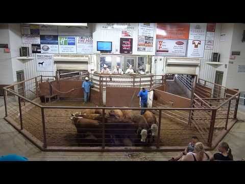 Amarillo Livestock Auction Spot2