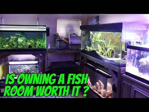 Aquarium Fish Rooms Are Awesome ! BUT ARE THEY WORTH IT ? The Pros And Cons To Owning A Fish Room