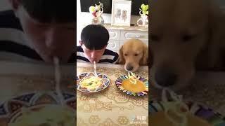 Thanh niên thi 'ăn mì nhanh' với hai chú Chó.