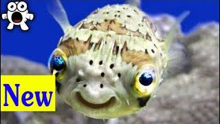 Top 20 Cutest Animals That Can Actually Kill You | cartoon Kids