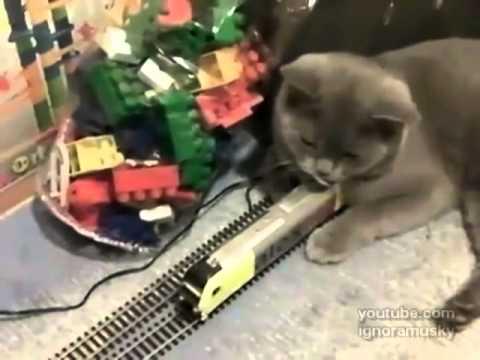 おもちゃの電車に何度衝突されても平気!まったく動じない猫