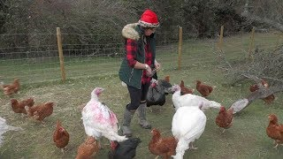 Rainham animal lover begins annual launch to save the lives of turkeys