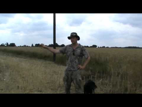 mark gilchrist shooting pigeons with a1 decoys equipment