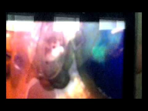 Rip Ben Xxxx.mp4 video