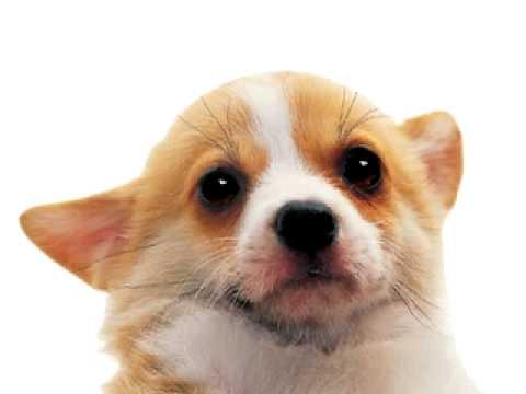 el perro bobby que habla