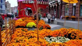 Crisantemos-Producciones Vicari.(Juan Franco Lazzarini)