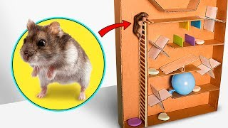 Hamster escape from cardboard