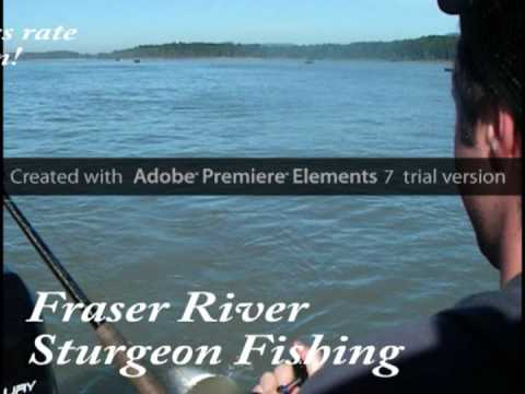 Sturgeon fishing-Salmon fishing the Fraser river BC Canada
